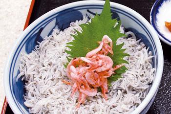 FujikawaGurume02.jpg